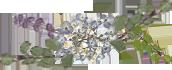 愛知県愛西市の花屋【花のひより園】